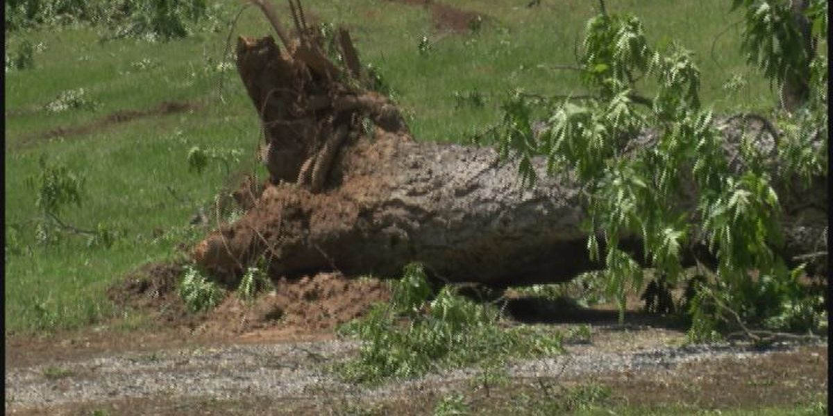 Storms cause damage in Lee County