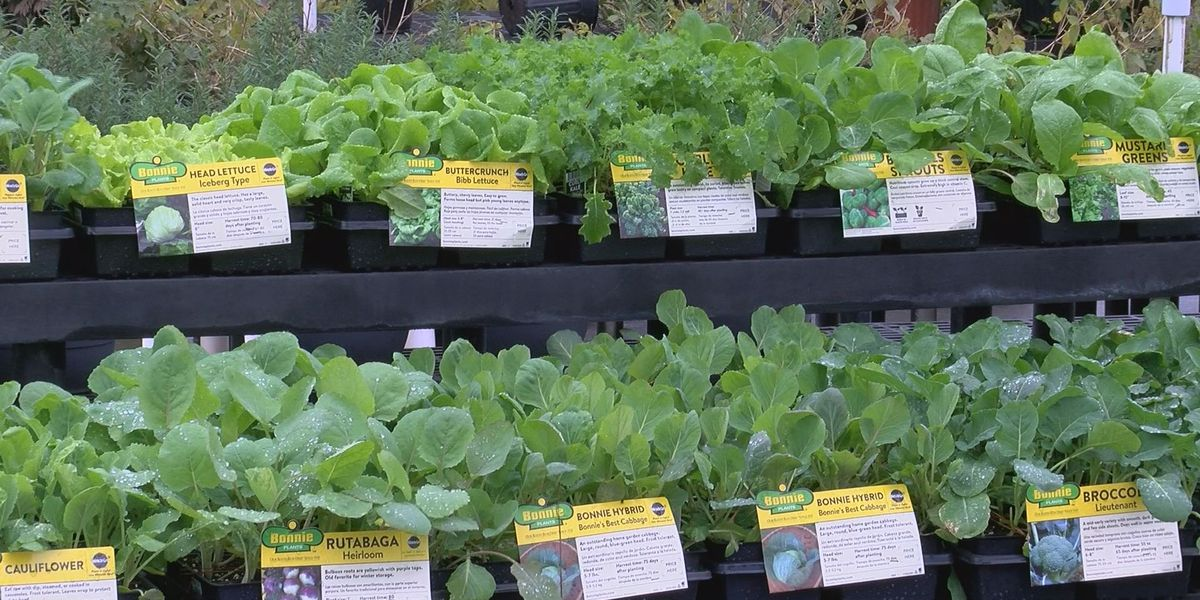 Mark's Greenhouses to host 'Grow Your Own Groceries' workshop
