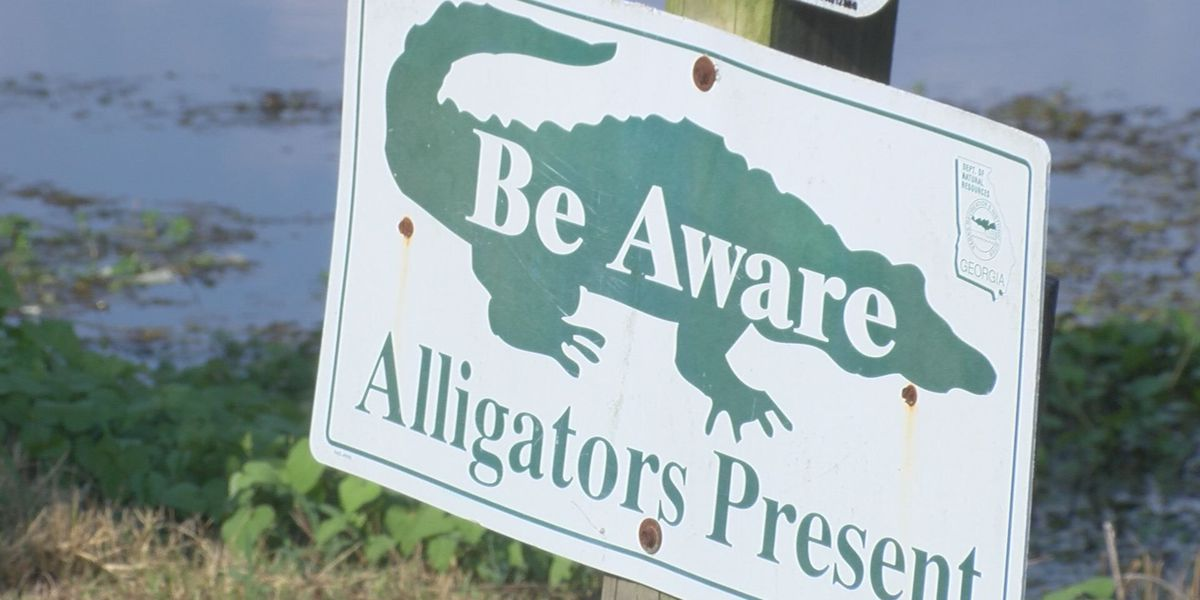 Officials set record straight on 'alligator' photo