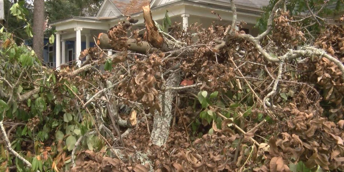 Lowndes Co. adjusts burning ordinance to allow cleanup after Irma