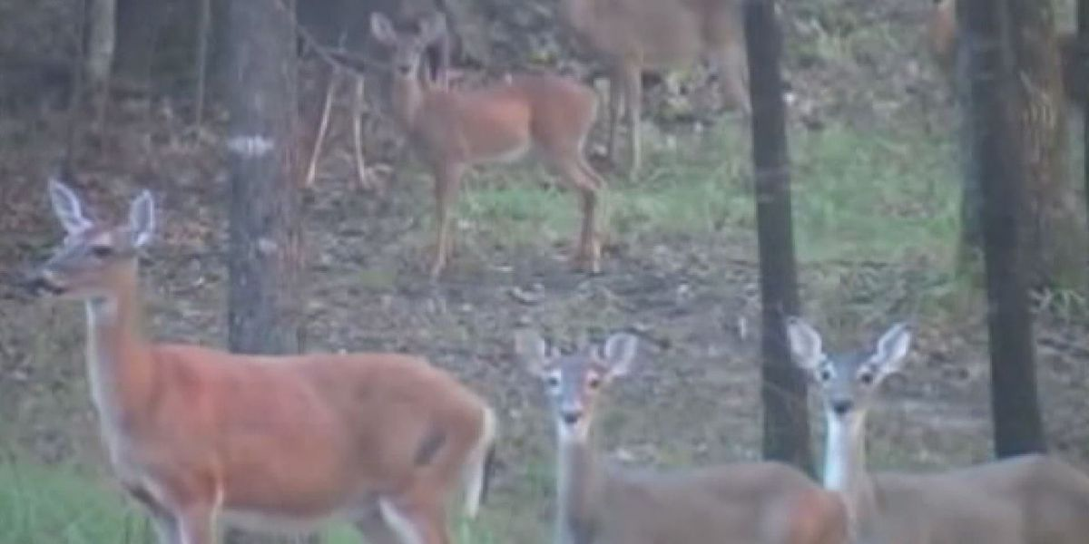 Precautionary steps to avoid deer after recent collision