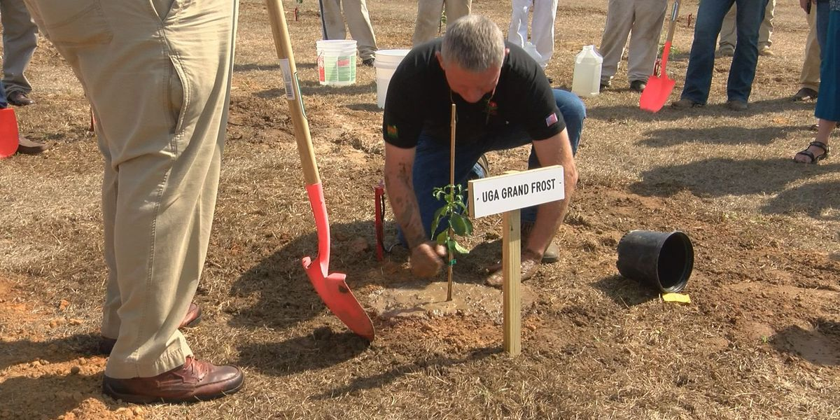 Mitchell Co. launches citrus farming