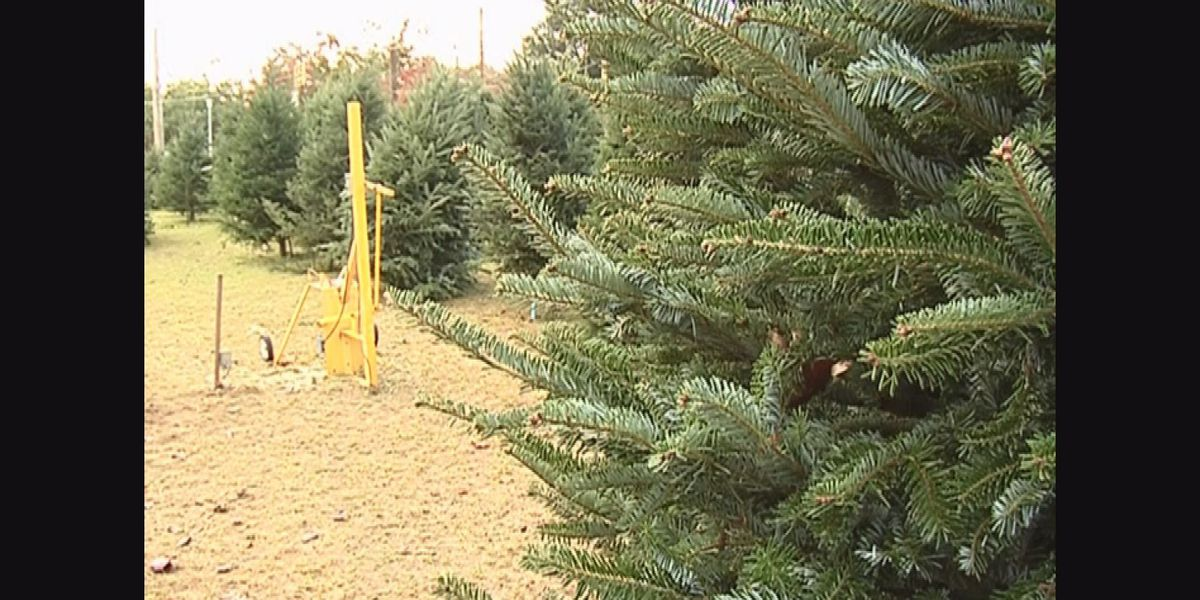 Tree chipping helps recycle