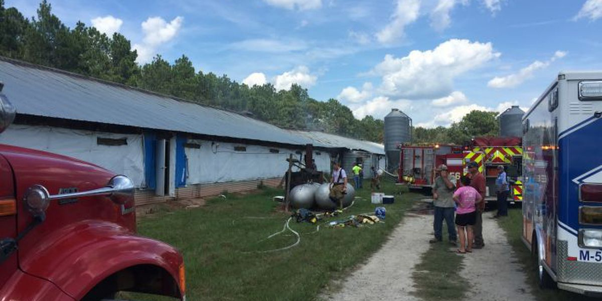 Several chickens die in afternoon fire
