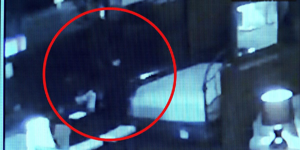 Thomasville police need help identifying furniture store burglar