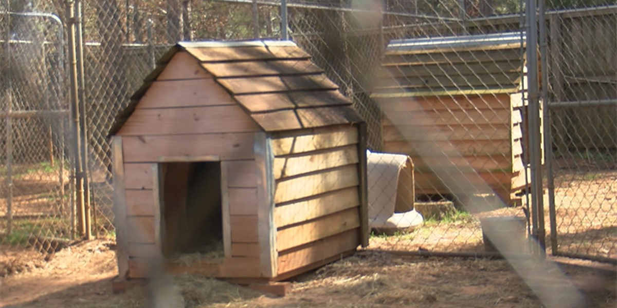 Aggressive pet cases increasing in Lowndes Co.