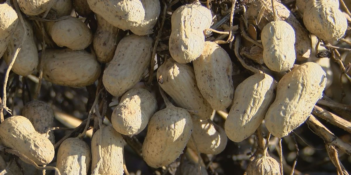 Government shutdown could delay 2019 peanut planting