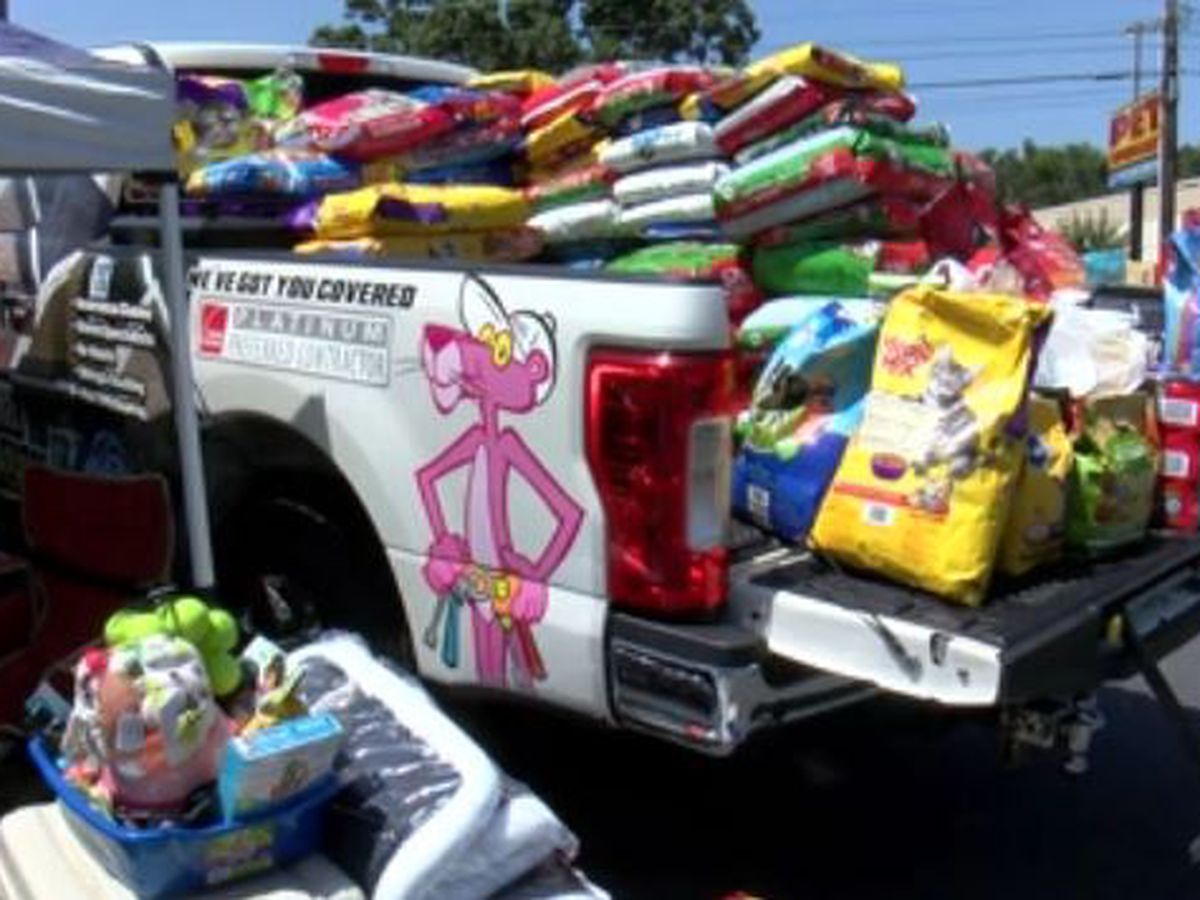 WALB rings in Christmas in July for animals in need