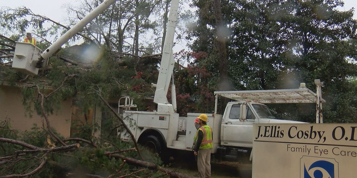 Tree falls through roof at family eye doctor