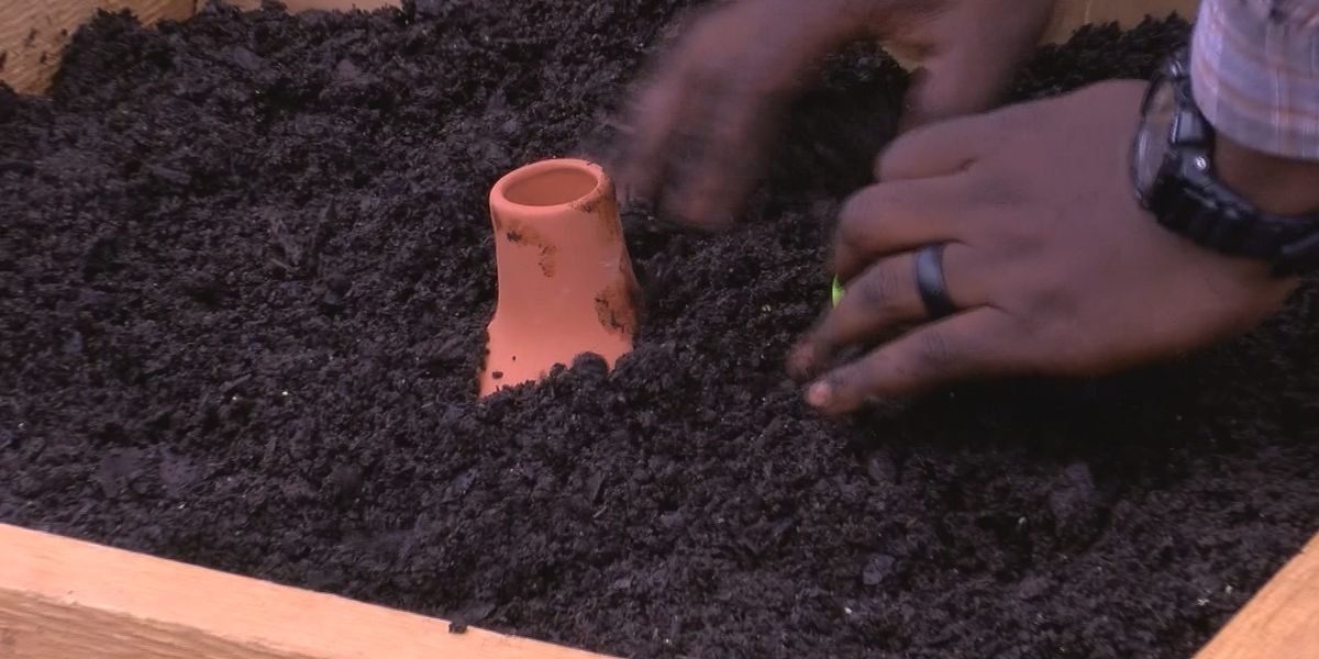 New community garden could help those in downtown Albany