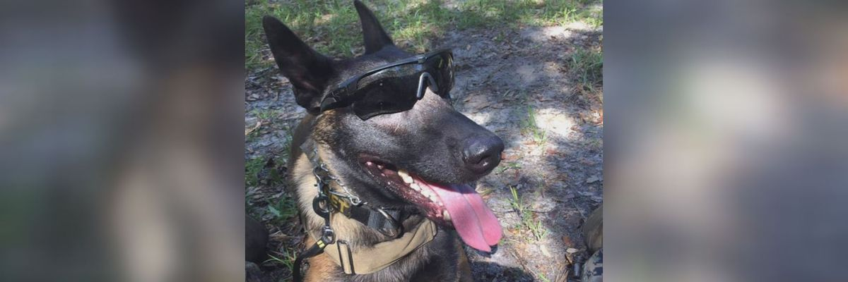 Foster mom for MCLB military dog speaks out after pup's death