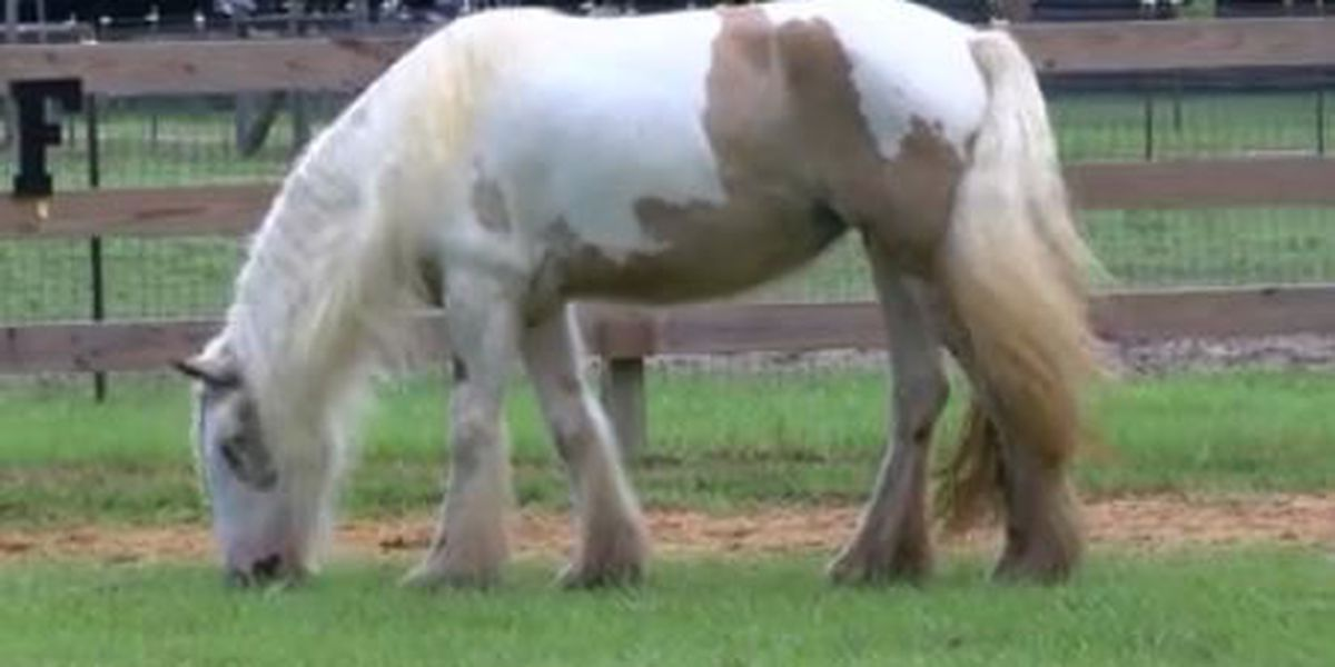 South GA therapeutic riding center wins a new horse