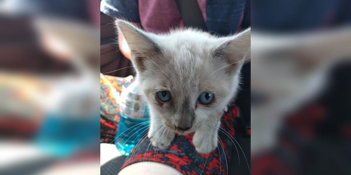 People are throwing cats from vehicles in North Carolina, sheriff says