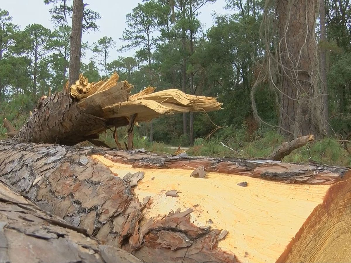 Storm cleanup continues in Dougherty Co.