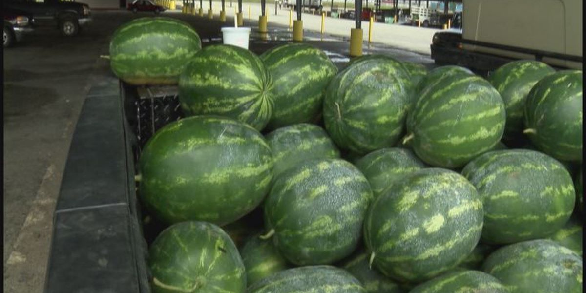 Dry May impacts Georgia's watermelon crop