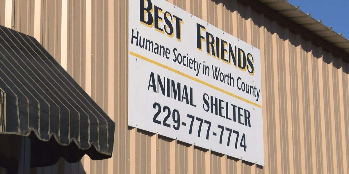 Best Friends Humane Society's 'Catpalozza' in full swing