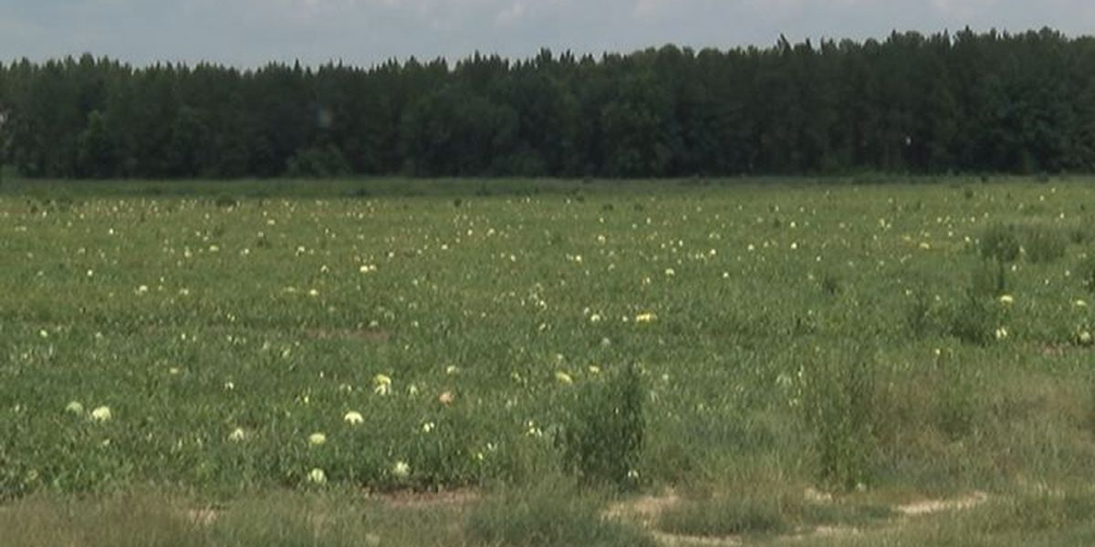 Extreme heat affecting at least one group of farmers