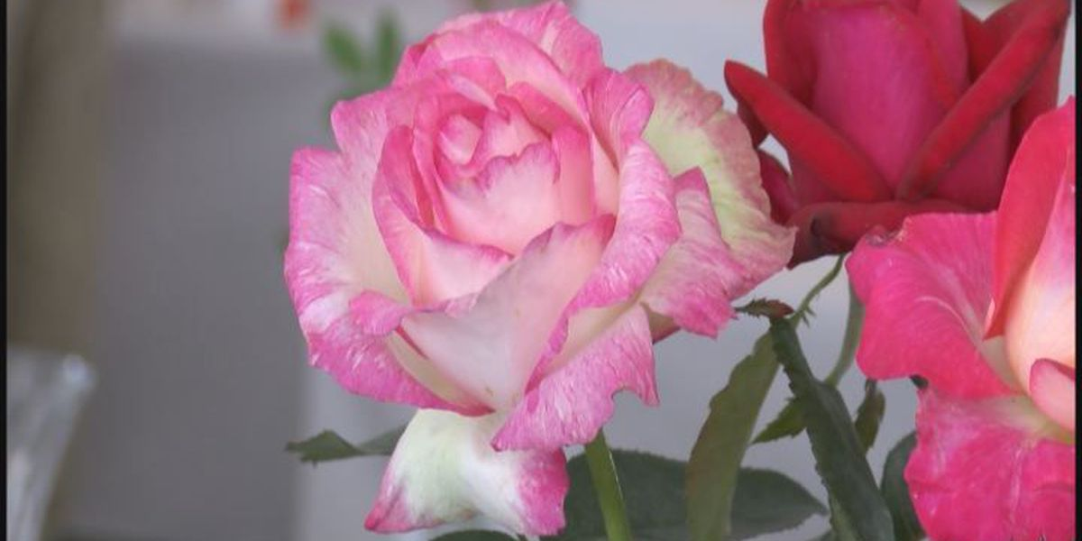 Thomasville rolls out rose carpet for Rose Parade