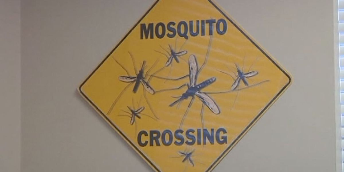 What you can do to avoid mosquitos
