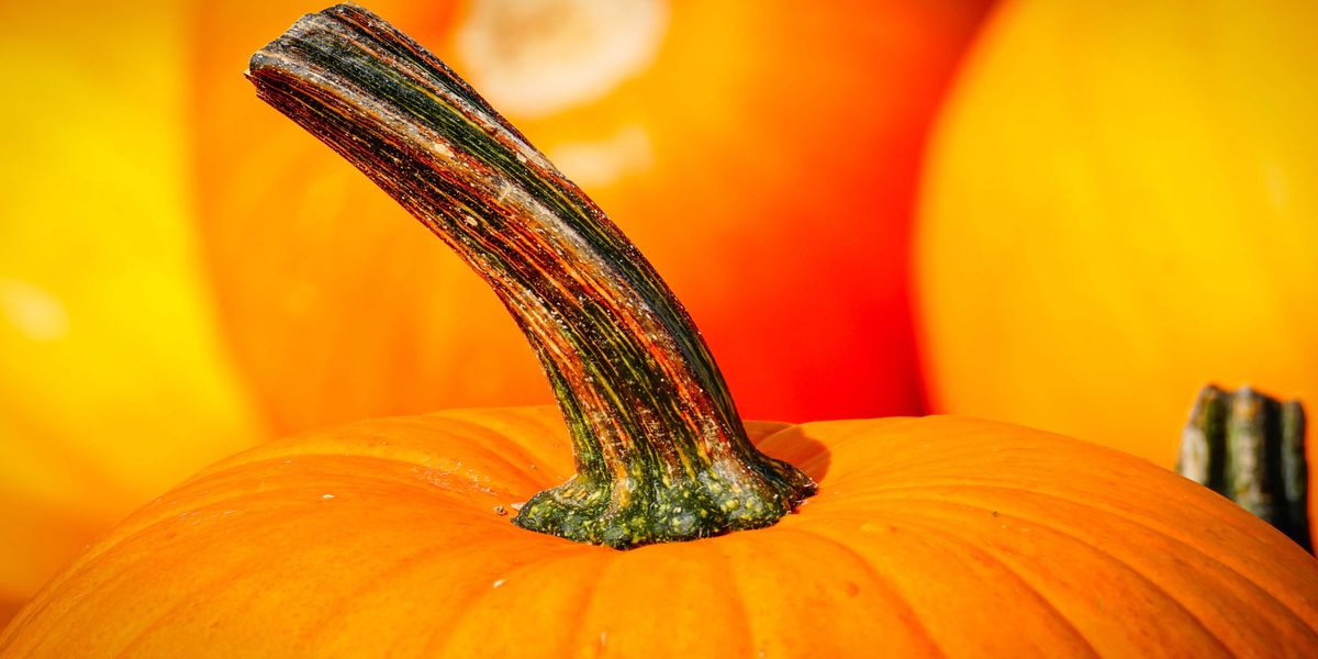 Boy's stolen pumpkin returned after family offers $500 reward for it