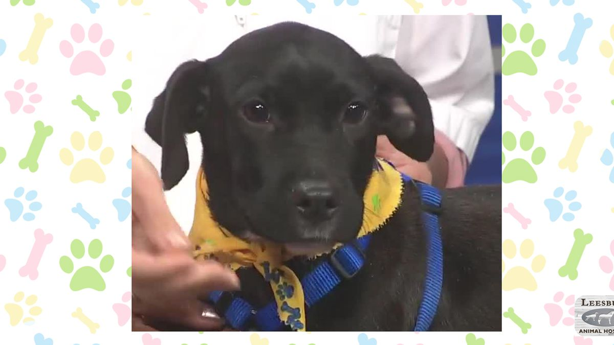 Pet of the Week, Sept. 23-27