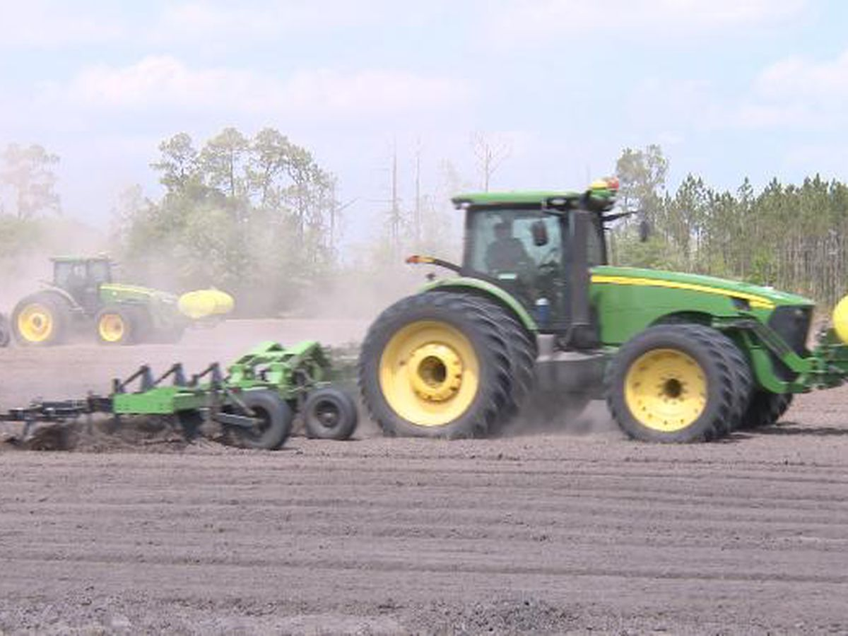 Local farmers work to keep grocery stores stocked