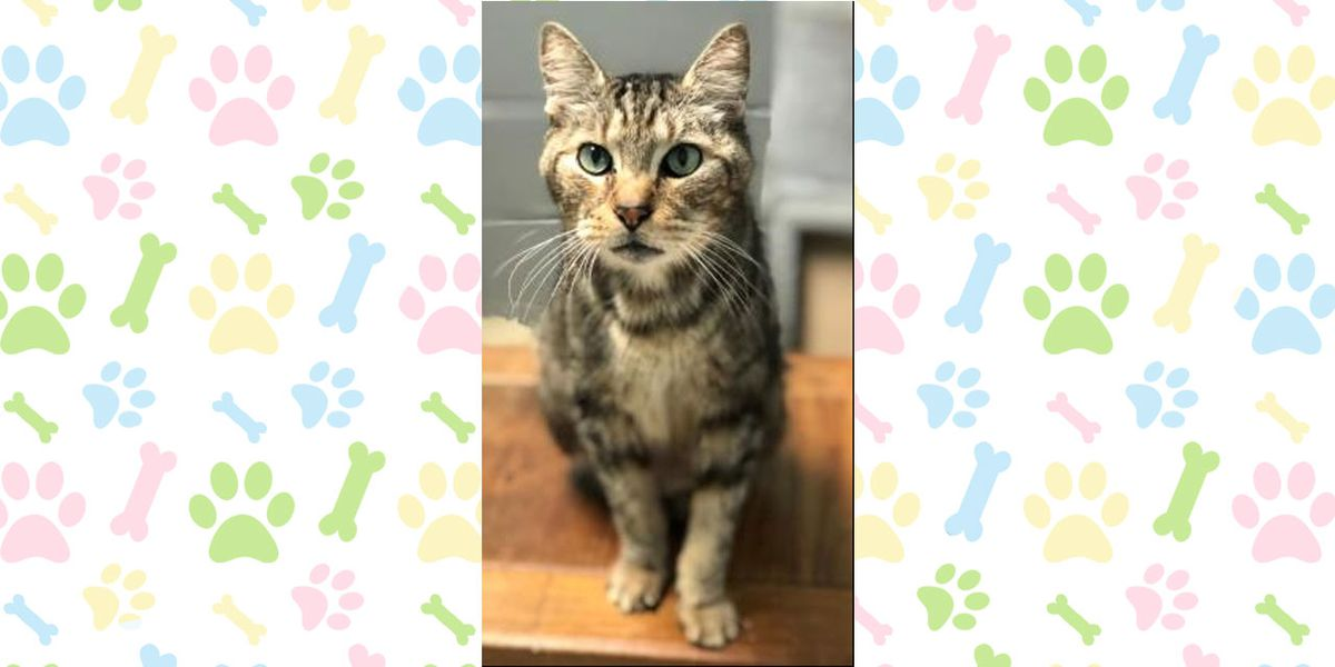 Pet of the Week, April 8-12