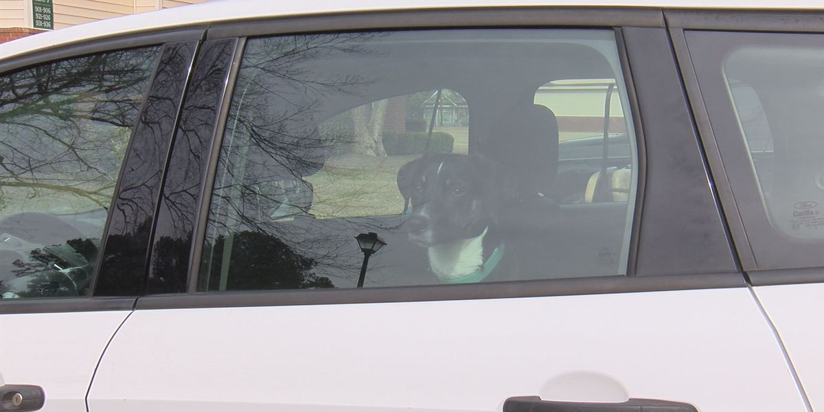 Law would protect those who break into hot cars to save pets