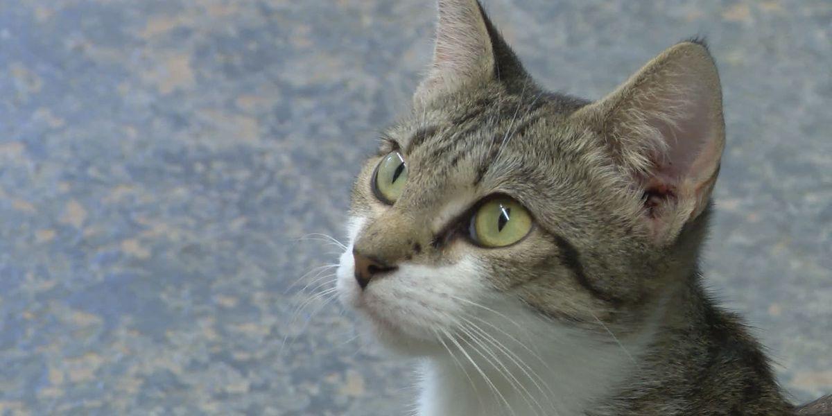 Blakely animal shelter gets foster program