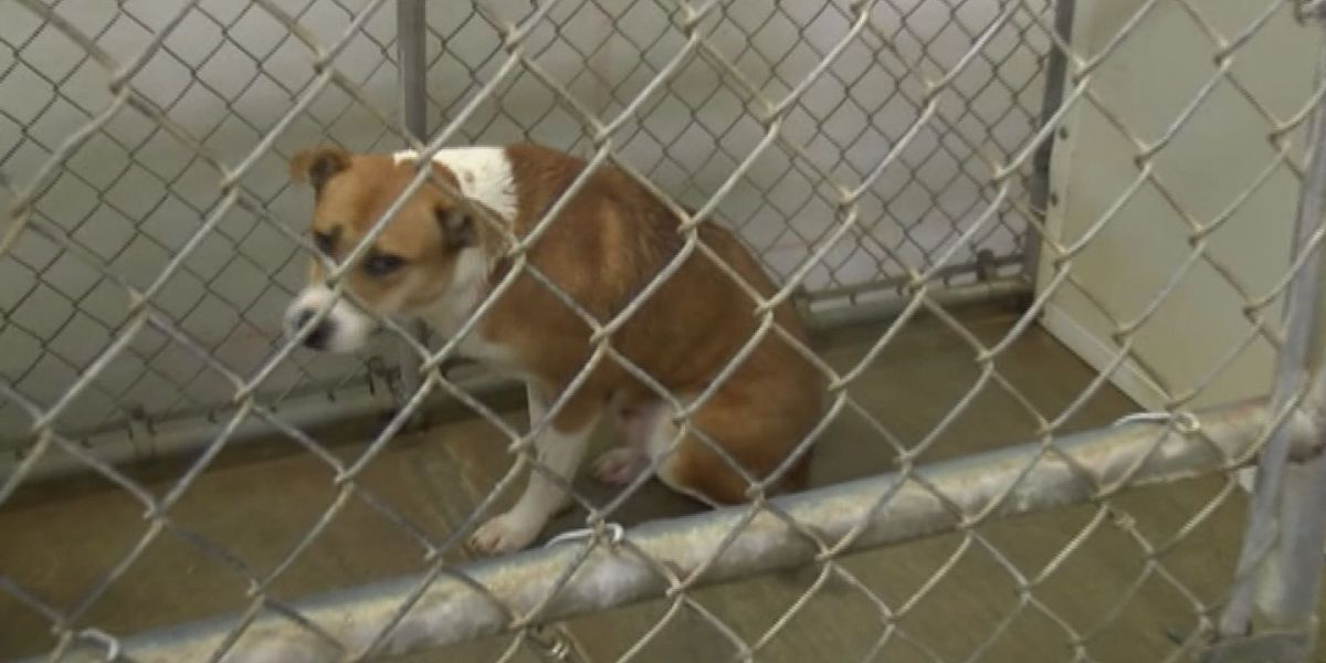Sumter Humane Society gets Pet Disaster Relief trailer donation