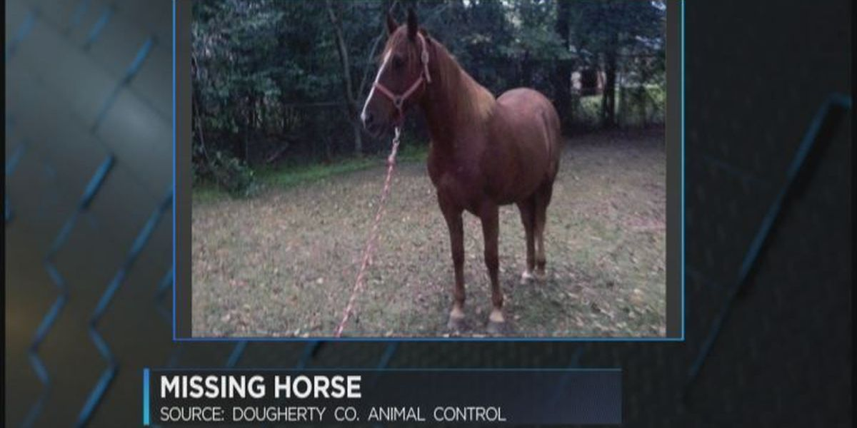 Search continues for Dougherty County horse's owner