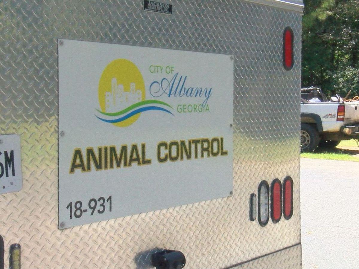 City commissioners consider amending dangerous dog ordinance