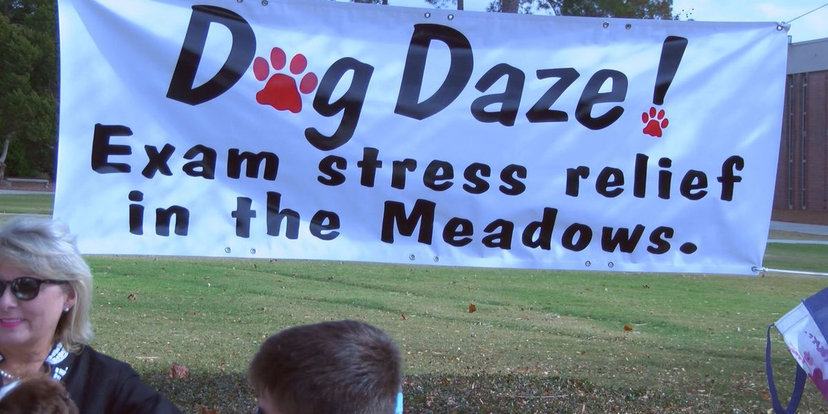 Therapy dogs help students deal with the stress of finals