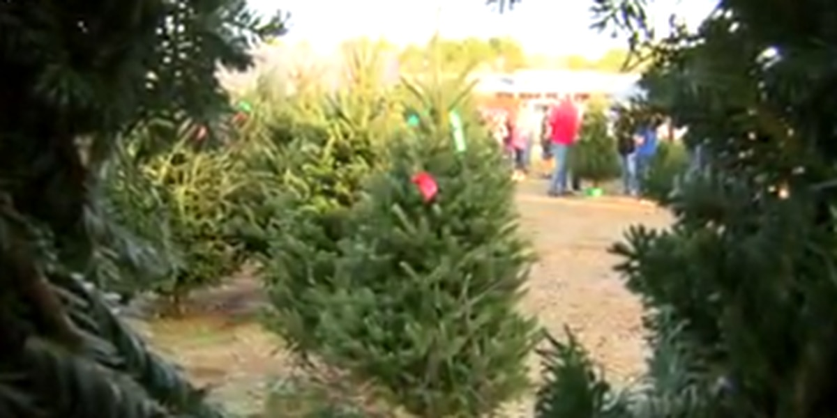 Avoiding Christmas tree fires ahead of the holiday