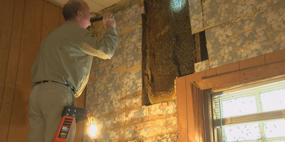 80K+ bees removed from Anderson City home after more than 70 years
