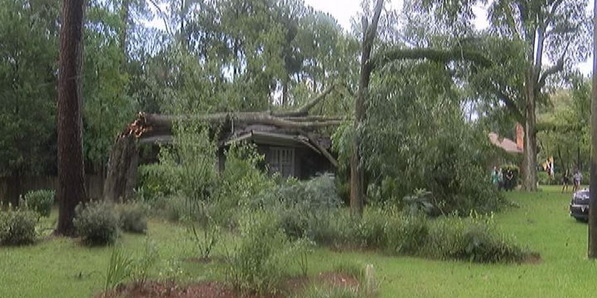 Tree falls during storm, buries home