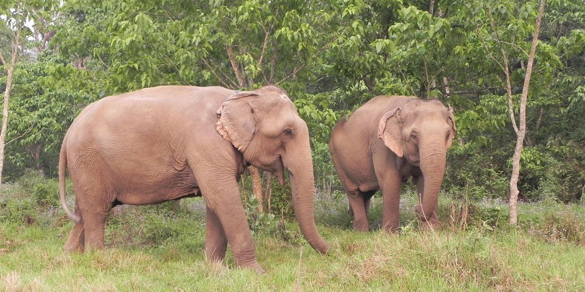 Elephant refuge headed to South Georgia; Founder excited for the future