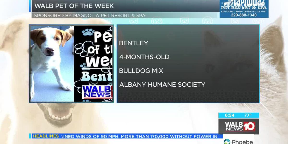 Pet of the Week, Sept. 10-14