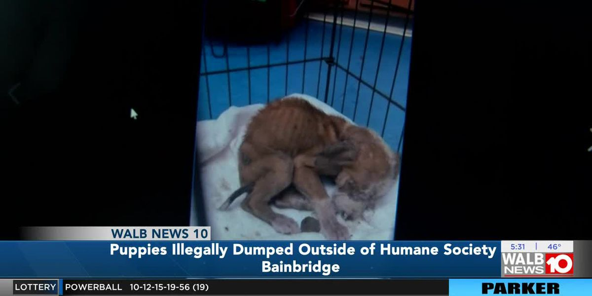 Puppies illegally dumped outside Bainbridge Humane Society