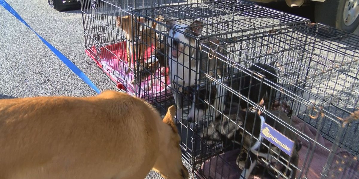 Puppy pipeline transports 40 SOWEGA dogs