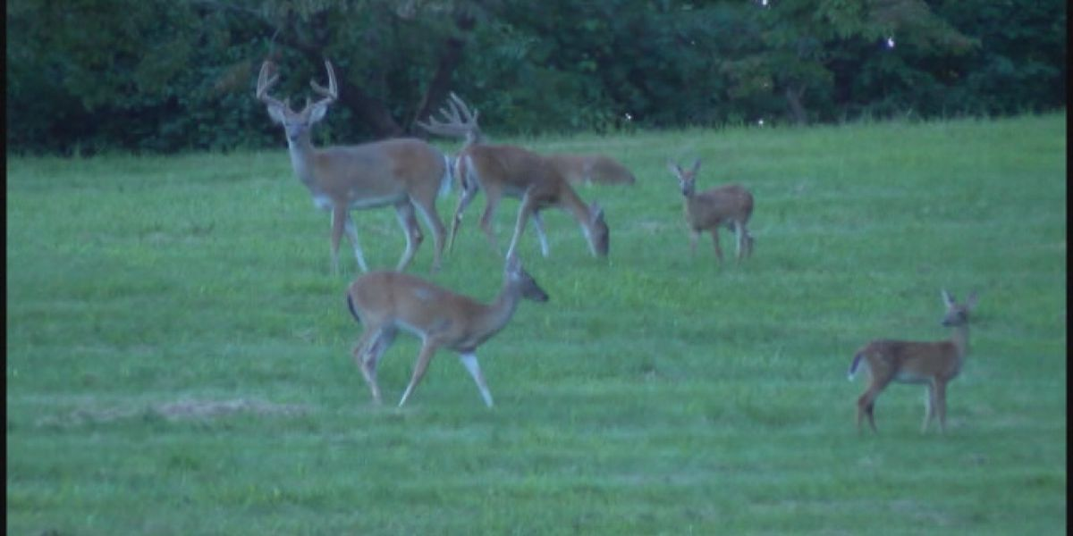 'Bow season' starts Saturday