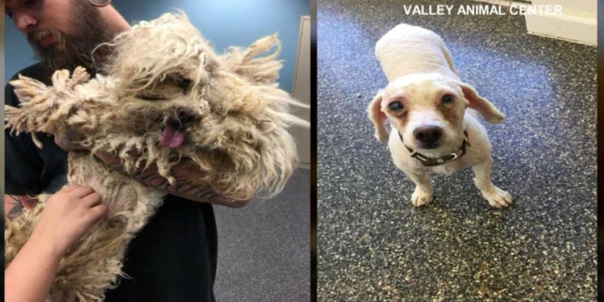 Shelter shaves 2 pounds of fur off severely neglected dog