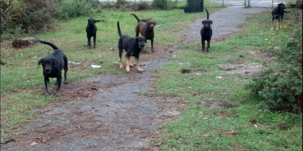 Du Pont dogs find new home, still need help