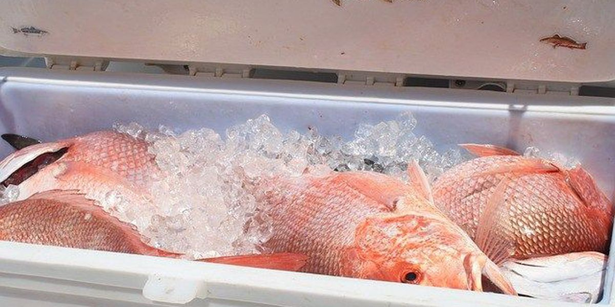 US says number of overfished fish stocks at all-time low
