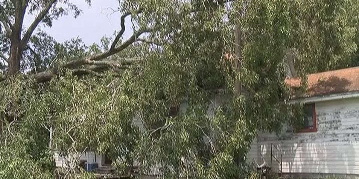 Huge tree takes out roof