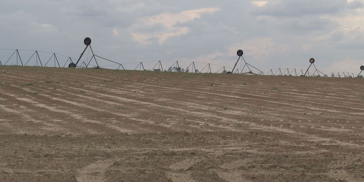 Farmers working to bounce back after January storms