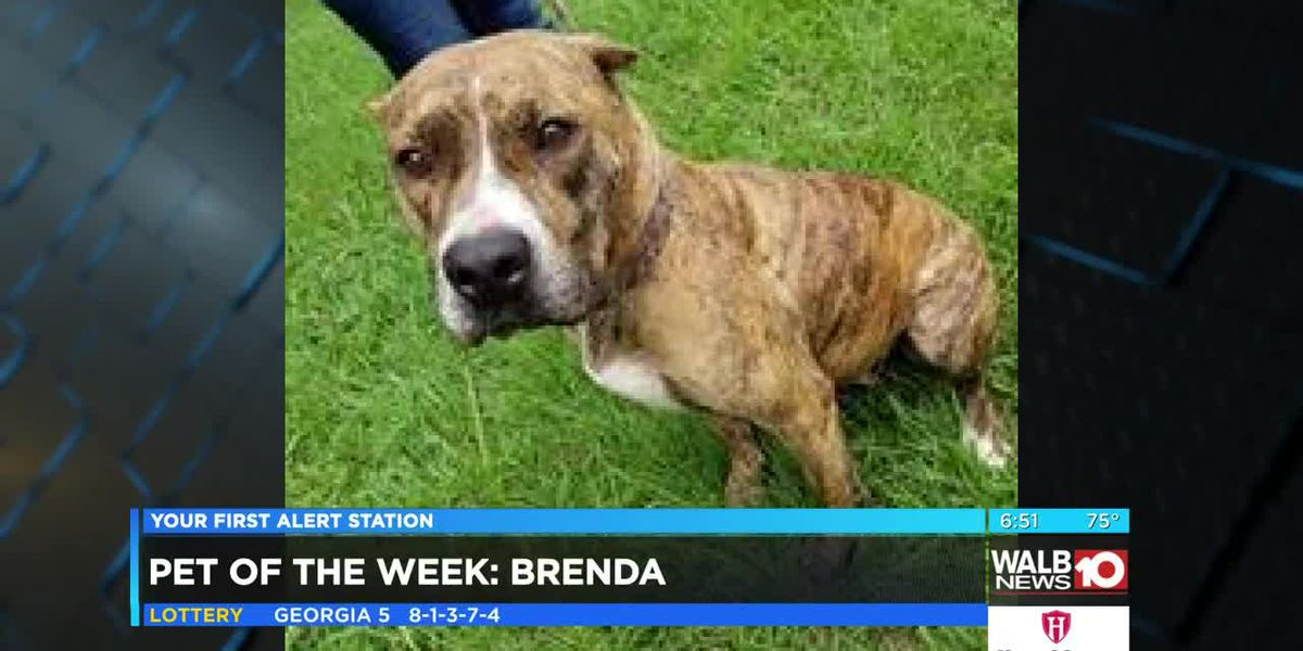 Pet of the Week: June 17-21