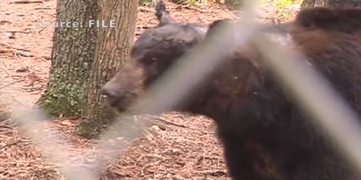 Lowndes Co. officials warn residents of bear sightings
