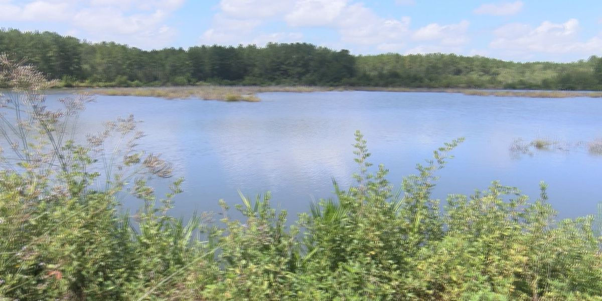 South GA fish cut back on mosquito population