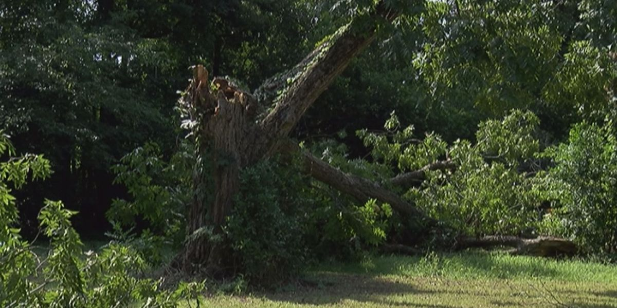 Check your trees- before the storm hits